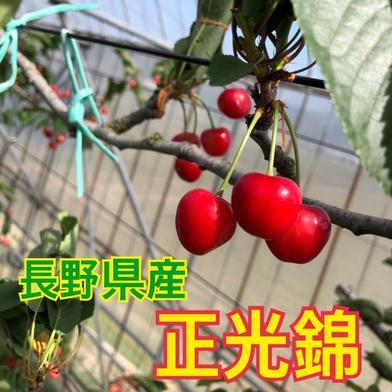 ハウスさくらんぼ【正光錦】 330g 果物や野菜などのお取り寄せ宅配食材通販産地直送アウル