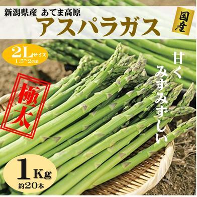 朝採りアスパラガス 2Lサイズ 1kg(約20本) 新潟県産  果物や野菜などのお取り寄せ宅配食材通販産地直送アウル