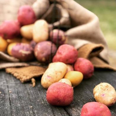 春の新じゃが  カラフルじゃがいも4種詰め合わせ‼️ 約4㎏ 果物や野菜などのお取り寄せ宅配食材通販産地直送アウル