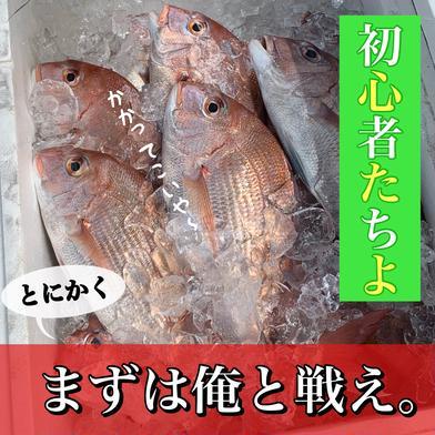 【初心者セット】瀬戸内鮮魚 詰め合わせ お試し  今治 愛媛 入るだけ EBISU☆FISHERY