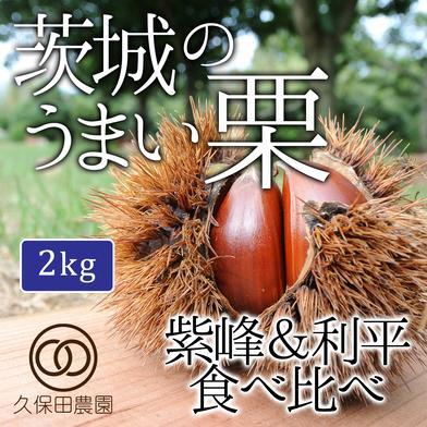 茨城のうまい栗 紫峰&利平食べ比べ 2kg(各1kg) 約2kg(各1kg/各約35個) 久保田農園