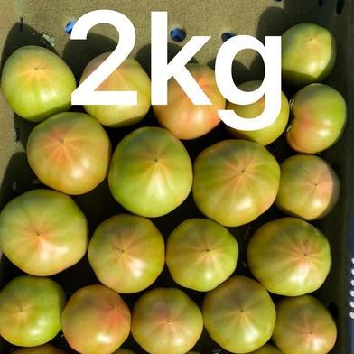 [お試し価格]採れたて訳ありトマト2キロ 箱込みで2キ以内です! 果物や野菜などのお取り寄せ宅配食材通販産地直送アウル