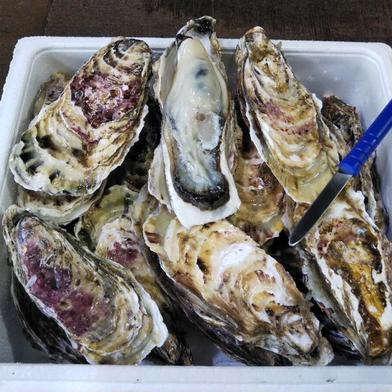 北海道噴火湾産 大粒牡蠣 生食用 18個 株式会社イワムラ水産