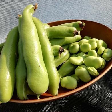 はなのきふぁーむのおひさま野菜 西洋そら豆と日本そら豆食べ比べセット 【1kg】 1kg キーワード: そら豆 通販