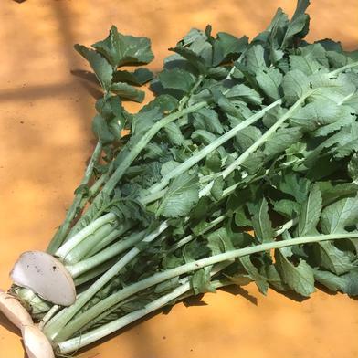 飲食店・大根葉好き必見‼️大根葉2kg🥗 2kg 大樹地農園