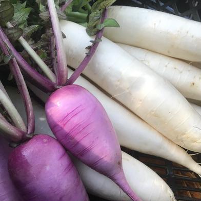 飲食店・大根好き必見‼️葉付き大根白むらさきミックス3kg🥗 3kg 果物や野菜などのお取り寄せ宅配食材通販産地直送アウル