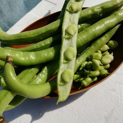 はなのきふぁーむのおひさま野菜 西洋そら豆【ファーベ】1kg 1kg キーワード: そら豆 通販