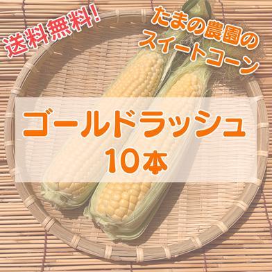 【宮崎特産!】ゴールドラッシュ10本!※西日本向け発送 10本(3.5kg前後) 果物や野菜などのお取り寄せ宅配食材通販産地直送アウル