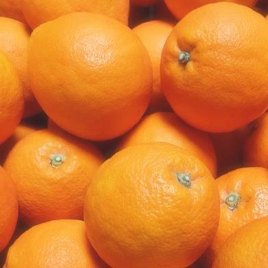 かわいい小玉*ブラッドオレンジ4.5K 4.5K 24個程度 果物(柑橘類) 通販
