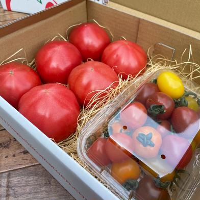 赤熟もぎり!水耕栽培の王様トマト&ミニトマトのセット 1箱 野菜(トマト) 通販