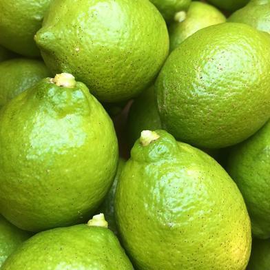 農薬不使用 瀬戸内グリーンレモン 3kg 3kg 愛媛県 通販