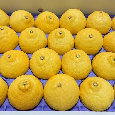 はるか 2箱セット 約8キロ 果物(柑橘類) 通販