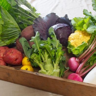 楽しい野菜の宝箱「やさいばこ」(10品ほど) 旬の野菜10品ほど キーワード: キャベツ 通販