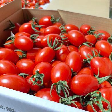 [完熟収穫‼️]「トマ・ランタン2kg」米村農園からお届け 1箱(2キロ) 野菜(トマト) 通販