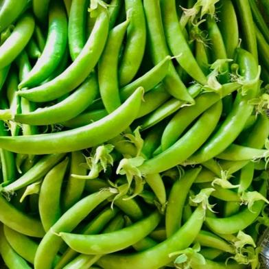 甘さはじける!スナップエンドウ 無選別品 1キロ 1キロ 野菜(豆類) 通販