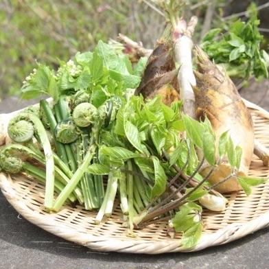 予約開始/アイヌ継承野菜、山菜採りたて詰合せ600g 600g以上 果物や野菜などの宅配食材通販産地直送アウル