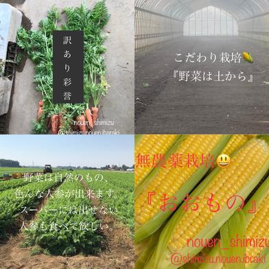[予約]🌽とうもろこし&🥕人参のセット😊 10kg(とうもろこし11〜13本)(人参20〜30本) 果物や野菜などの宅配食材通販産地直送アウル