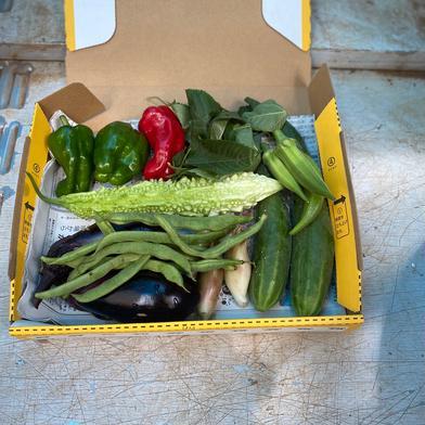 お一人暮らし用 好き清友農園 無農薬野菜詰め合わせ 0.8kg 神奈川県 通販