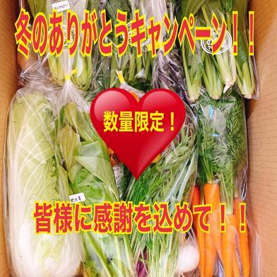2020ありがとう!完全お任せ野菜BOX(10品目程度) のぐちファーム