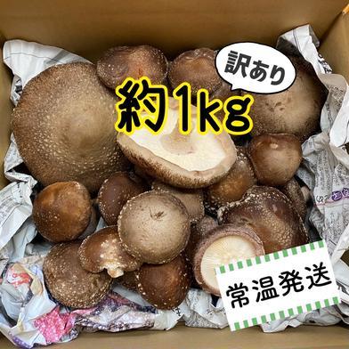 【訳あり】信州富士見高原産!生しいたけ 約1kg 約1kg キーワード: 訳あり 通販