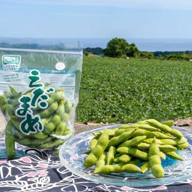 春の国産『生』枝豆は沖縄の気候ならでは!濃厚であまい枝豆を是非。【4.5kg】 4.5kg 野菜(豆類) 通販