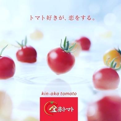 トマト好きが恋をする。1000g 金赤トマトミニ 1kg 愛知県 通販