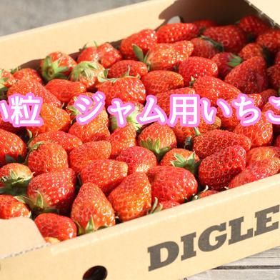 小粒や変形いちご ジャムなどの加工向け!(1箱約1kg) 1kg×2箱 千葉県 通販