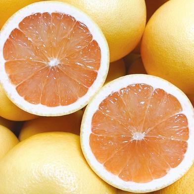 佐賀産*グレープフルーツ・さがんルビー《小箱》 1.5K 5個 果物(柑橘類) 通販