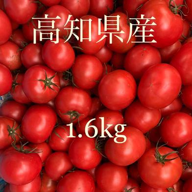 土佐のフルーツトマト 1.6kg 果物や野菜などの宅配食材通販産地直送アウル