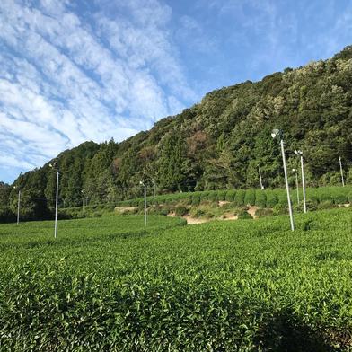 2021年 有機初刈新茶 100g 果物や野菜などの宅配食材通販産地直送アウル