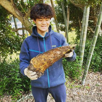 鮮度抜群 とれたて筍(たけのこ) 収穫後即日発送!×2kg 2kg 神奈川県 通販
