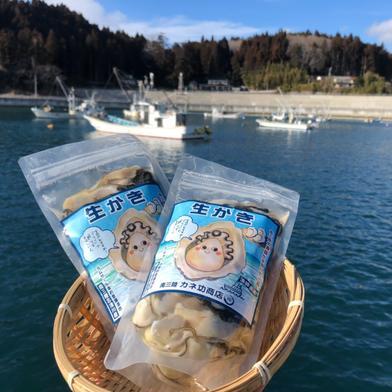 南三陸志津川湾より牡蠣漁師直送 発送日剥きたて真牡蠣のむき身300g×2パック 宮城県 通販