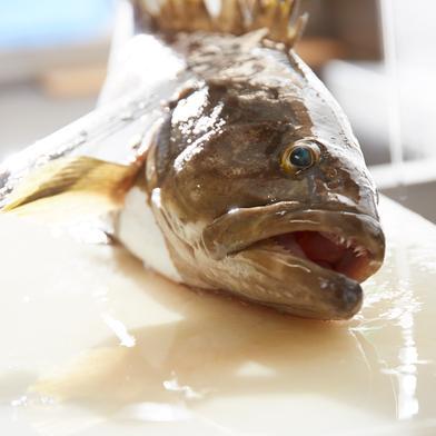 壱岐産 高級クエまるごと一本 約2キロサイズ 約2キロサイズ 魚介類(その他魚介) 通販