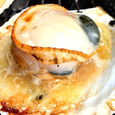 日本魚類の2年貝【5kg】ヘラ付 5k 果物や野菜などの宅配食材通販産地直送アウル