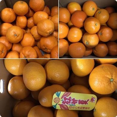 紅甘夏、ポンカン、伊予柑、みかん食べ比べセット10キロ 10キロ 旬果ふるさと農園