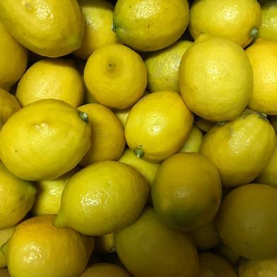 お試し!果汁たっぷり『完熟レモン』1㌔ 1.5㌔ 愛媛県 通販