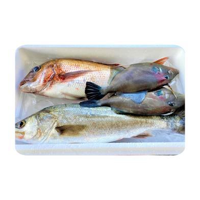 🌸春の鮮魚詰め合わせ🌸 鮮魚詰め合わせ3~3.5kg 香川県 通販