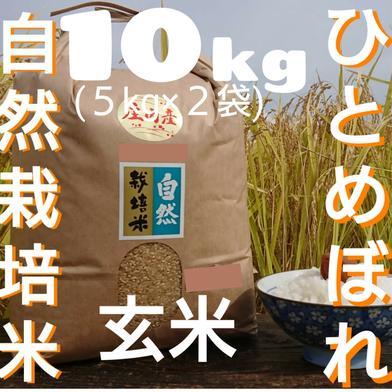 自然栽培 お米の旨味たっぷり氷温熟成  ひとめぼれ 令和2年産 山形県産 庄内産 庄内米 玄米 10kg(5kg×2袋)) 10kg(5kg×2袋) 山形県 通販