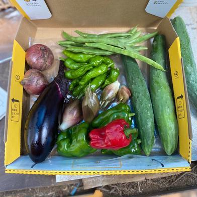 鈴木清友農家 一人暮らし用 無農薬野菜詰め合わせ 総重量1kg以下 神奈川県 通販