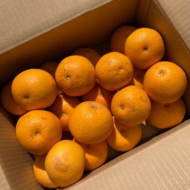 今季限定価格!5kg 小さめ【訳あり】八朔☆ネット販売スタート記念☆ 5kg 果物(柑橘類) 通販