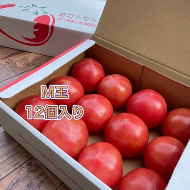 赤熟もぎり!水耕栽培の王様トマトM玉12個(2キロ箱) M玉12個(2キロ箱満杯) 野菜(トマト) 通販