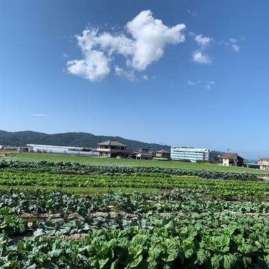 季節の野菜セット 4〜6種類のお野菜 farm house ちしゃ