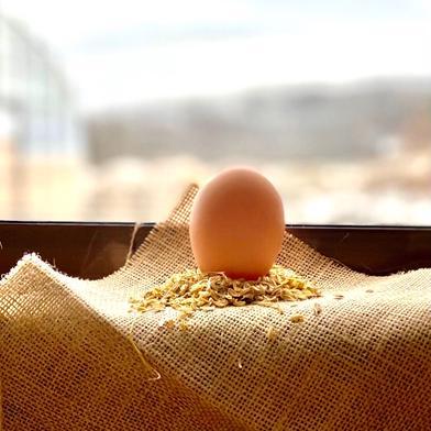 北海道ファームモチツモタレツの平飼い有精卵 20個 卵 通販