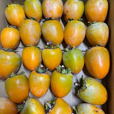 干し柿用 サエフジ渋柿 4kg 果物(柿) 通販