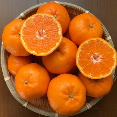 甘さ際立つ『ポンカン』3kg 3㌔ 愛媛県 通販