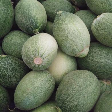 熊本県産 摘果メロン タカミ 子メロン 約3㎏ 果物や野菜などの宅配食材通販産地直送アウル