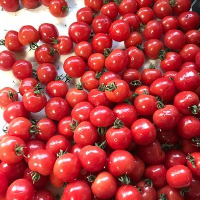 旨味トマト🍅プチぷよ【約800g】 800g 野菜(トマト) 通販