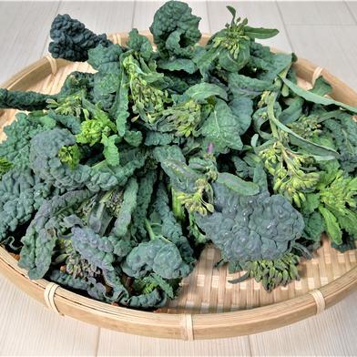希少品!柔らかくて美味しいカーボロネロの菜花 カーボロネロの菜花 1㎏ 山口県 通販