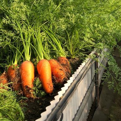 JASの葉付き人参 9k 果物や野菜などの宅配食材通販産地直送アウル