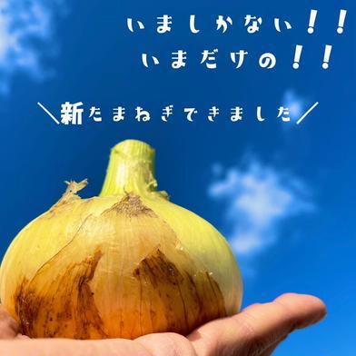 おかげさまで前年度完売! 淡路島産 新玉ねぎ 5kg 5kg 果物や野菜などの宅配食材通販産地直送アウル